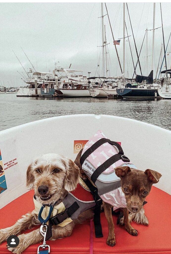 Eco Boat Rentals Dog-friendly